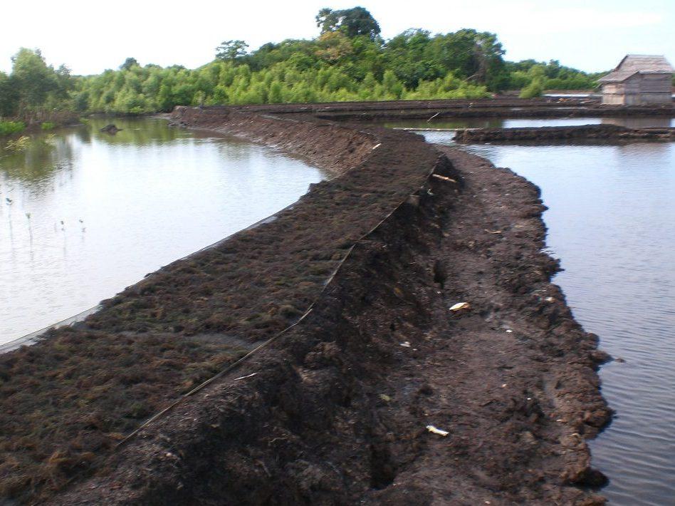agarindobogatama-seaweed-farming