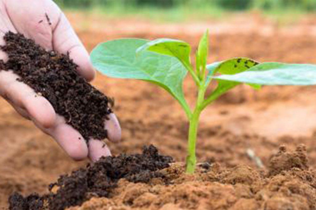 plantagar-as-fertilizer